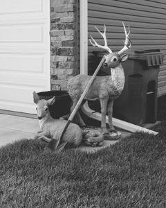 suburbia deer