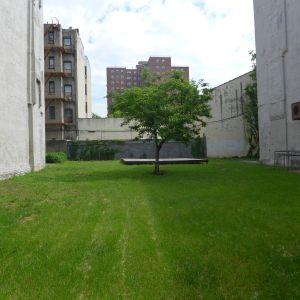 Tree, 109th street