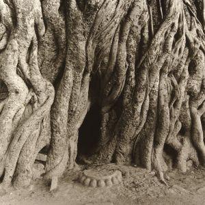 Banyan Shrine