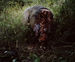 poaching, front carcass detail # I, dol dol, northern kenya-from the series 'with butterflies and warriors'-David Chancellor