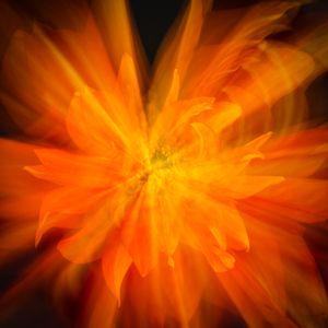 Ethereality - Orange Dahlia