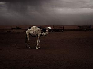 Dajla, Saharawi Refugee Camp. Hamada Desert (Sahara), Algeria.