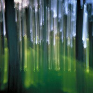 Cypress 4 (vibrations) © Alfred Tom