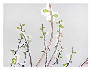 Snow Figs