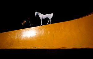 White horse, 2006