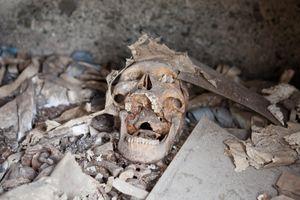Skull, Maa Cemetery