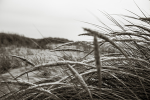 the Dune Grass