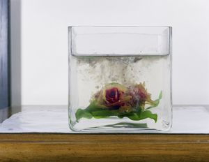 """Rose at the Home of Former Detainee from """"If The Light Goes Out: Home from Guantanamo"""" © Edmund Clark"""