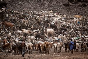 Bamako, Mali: Landfill in the capital, which is located in the near proximity of the river Niger, the only true water source, and only a stone's throw away from the most prestigious hotel in town. © Matjaz Krivic