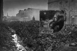 ALLEYWAY WITH CHIMPANZEE, 2014
