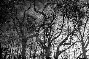 A shadowmoor