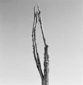 Dead Forest 3