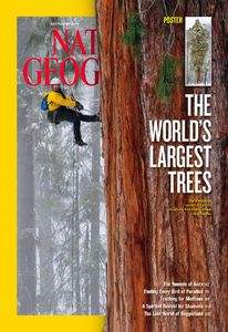 """The World's Largest Trees."" Cover, December 2012."