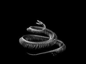 Python. Python sp. Tropical Africa, Asia and Australia (L. 2,30) © Patrick Gries