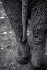 Tail End - Nairobi, Kenya