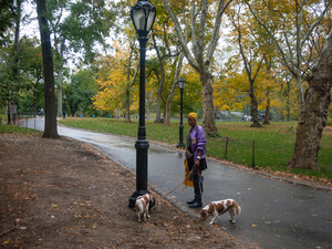 Woman With Dogs At Park Entrance