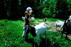 touching a goat