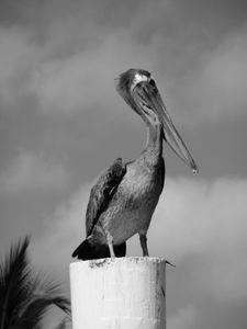 Pelican on a Post, Sanibel Island