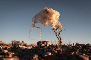 Plastic Tree #2
