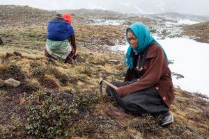 A woman sits on a mountain slope with a yartsa gunbu digging tool. Upper Dolpo, Nepal, June 2017.