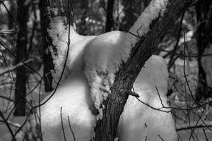 Вуайерист (Взгляд из-за дерева одним глазом). Парейдолия