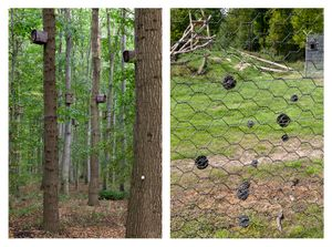 Bird boxes & Electric fence
