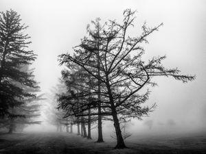 Reaching in the Fog