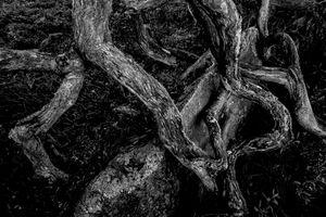 Deep dark forest 5