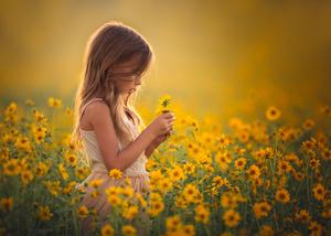 Golden Daydreams