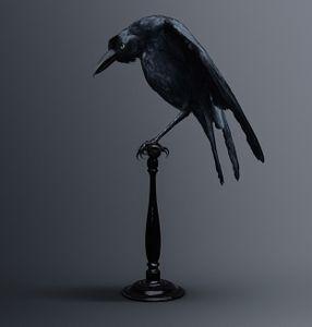 CARRION CROW [Corvus memoria eidetica] Bird of memories