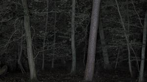Foresta - reverse 02-2