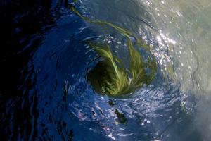Green vortex