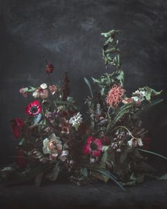 Floral Movement / Red Anemones