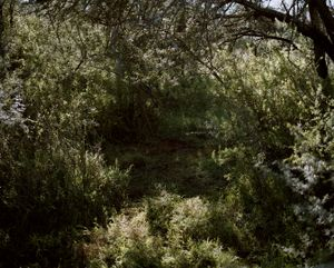 lechwe bed with blood, eastern cape, south africa-from the series 'hunters'-David Chancellor