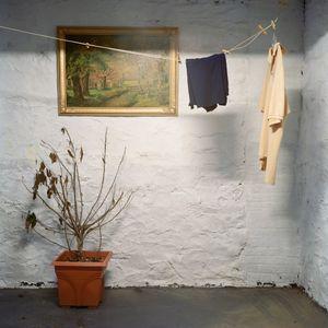 untitled 34 (dead plant) © Gesche Würfel