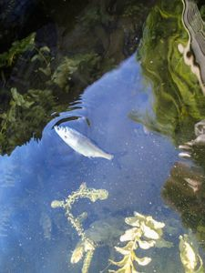 If fishes could feel - what would they think about the other side of their world - in the air?