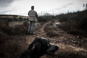 Traditional hunting in the south of Portugal. © Antonio Pedrosa