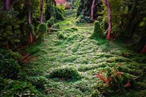 """""""Enchanted Forest"""""""