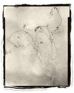 Botanical Specimen with Salt (Wildflower No. 1) © Claire A. Warden