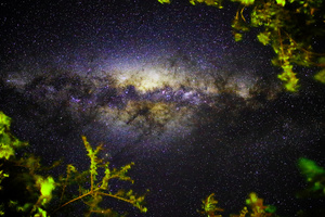 A night under the stars/Looking up at the night sky from a garden in the Karoo, South Africa