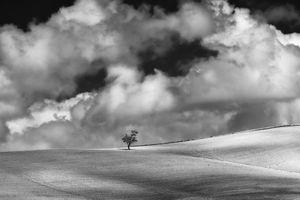 Observed Tree