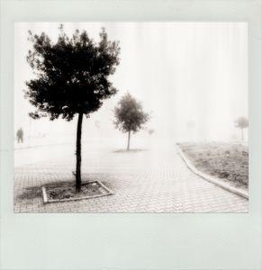 Transversal Memory #6