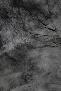 Untitled (Trees 4)