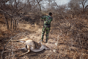 Black Mamba Yenzekile reports the location of a dead kudu