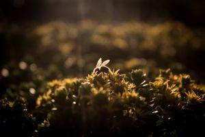 Una abeja haciendo de las suyas