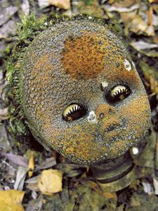 TRACES-TCHERNOBYL - La poupée atomique