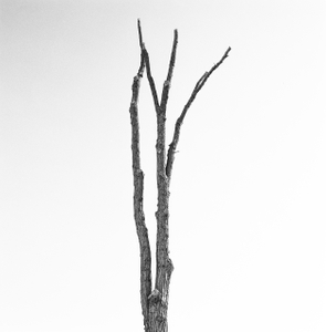 Dead Forest 6