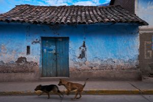 Stray dogs on the streets of Calca, Cusco, Peru