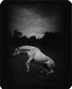 """Untitled"" (Horse Standing Up), 2007 © Giacomo Brunelli"