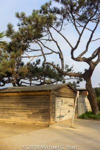 Garage and Tree (Vertical)